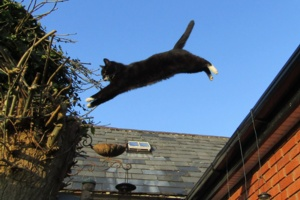 Mr Mittens in flight.jpg
